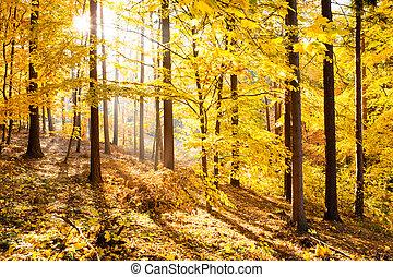ősz erdő, belélegzési, táj, bukás, scenery.