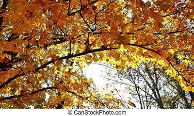 ősz erdő, jár