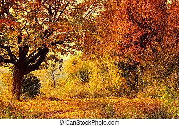 ősz erdő