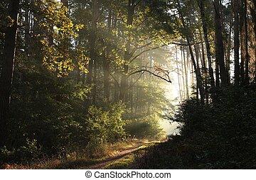 ősz erdő, napkelte