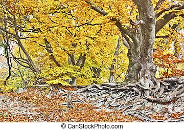 ősz erdő, sárga