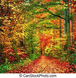 ősz erdő, színes, színhely