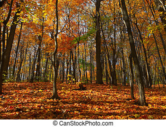 ősz erdő, színhely