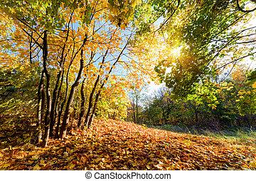 ősz, erdő, táj, bukás
