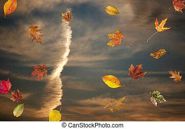 ősz, esés, napnyugta, zöld