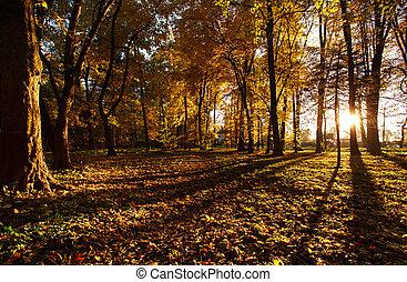 ősz, fény, beállítás, liget, nap