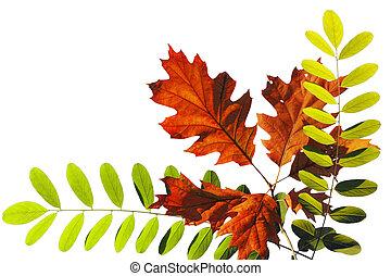 ősz, fényes, zöld