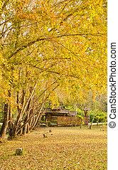 ősz, fa, juharfa, fülke, alatt