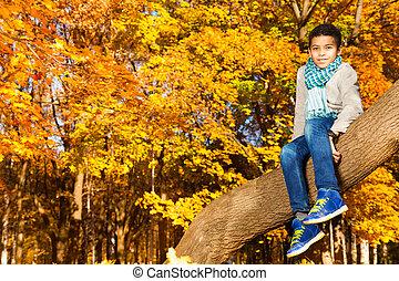 ősz, fa, liget, ülés