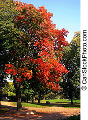 ősz, fa