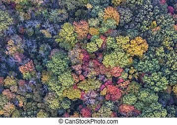 ősz, felül, bitófák