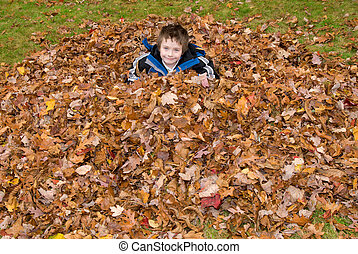 ősz, fiú, zöld, cölöp, fiatal