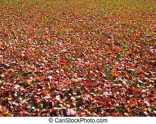 ősz foliage
