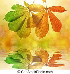 ősz, gesztenye, zöld, fa