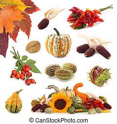 ősz, gyűjtés