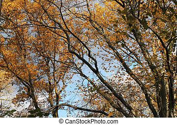 ősz, háttér
