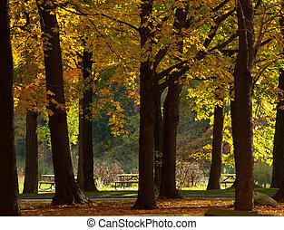 ősz, háttérfüggöny