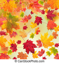ősz juharfa kilépő, háttér