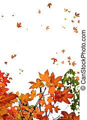 ősz juharfa leaves, háttér