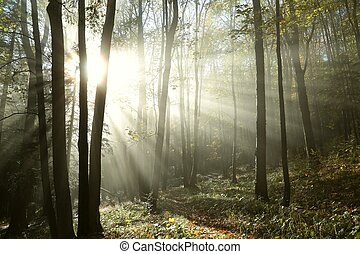 ősz, ködös erdő