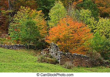 ősz, közfal, öreg