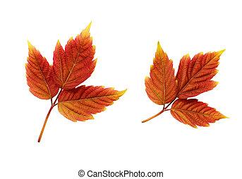 ősz kilépő, állhatatos, színes