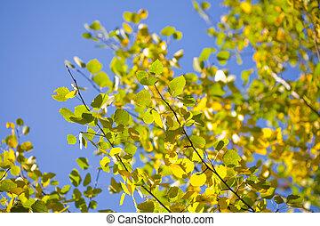 ősz kilépő, alatt, a, kék ég