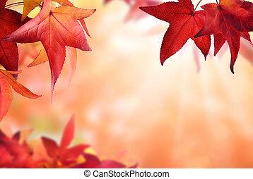ősz kilépő, bokeh, háttér, piros
