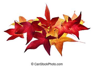 ősz kilépő, egyezség