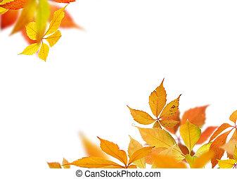 ősz kilépő, elágazik