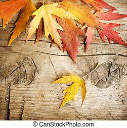 ősz kilépő, erdő, felett, háttér