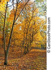 ősz kilépő, esés, erdő