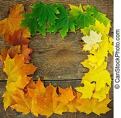 ősz kilépő, esés, juharfa, keret