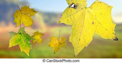 ősz kilépő, esés