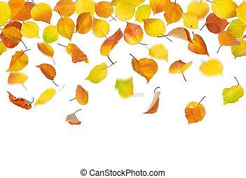 ősz kilépő, esés, seamless