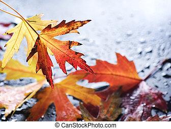 ősz kilépő, fekete, felett, nedves