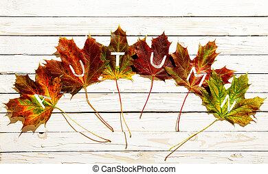 ősz kilépő, fogalom, színes