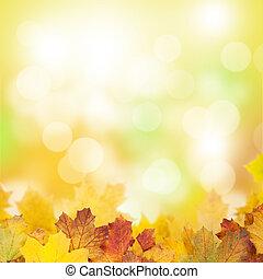 ősz kilépő, háttér, juharfa