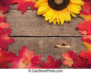 ősz kilépő, háttér, színes