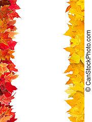 ősz kilépő, keret, juharfa