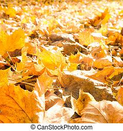 ősz kilépő, napvilág