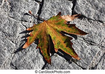 ősz kilépő