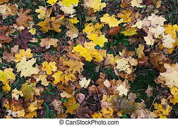 ősz kilépő, színes