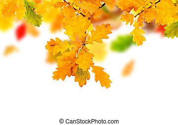 ősz kilépő, tölgy