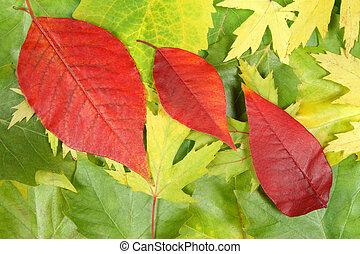 ősz kilépő, tervezés