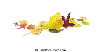 ősz kilépő, transzparens