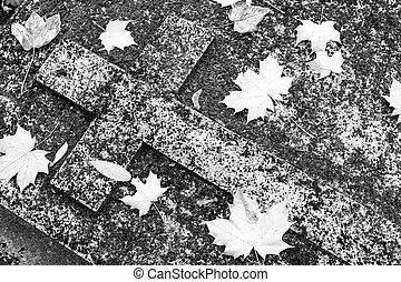 ősz, komoly, keresztény, leaves., moha