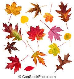 ősz lap, gyűjtés