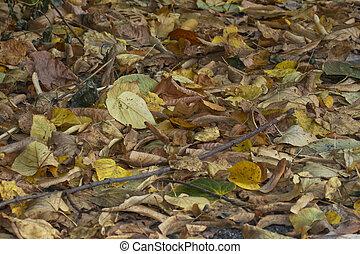 ősz, levél növényen, bukás, zöld