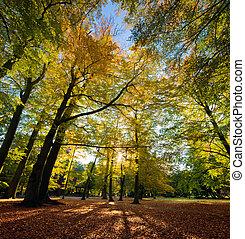 ősz, liget, színes, bukás